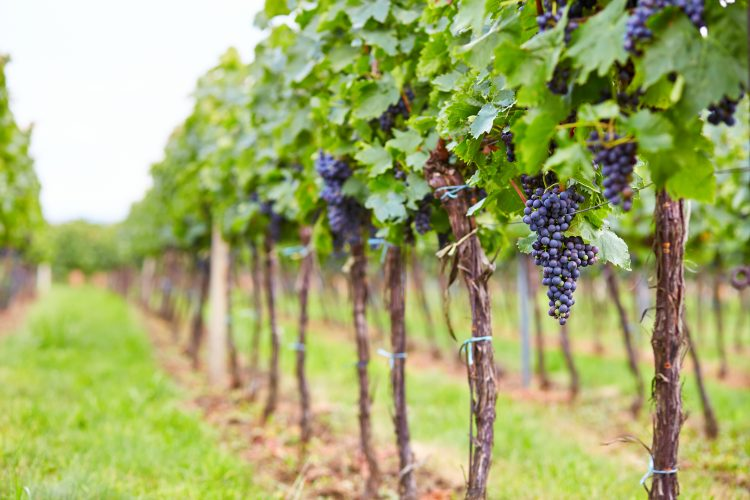 Content marketing in the wine industry